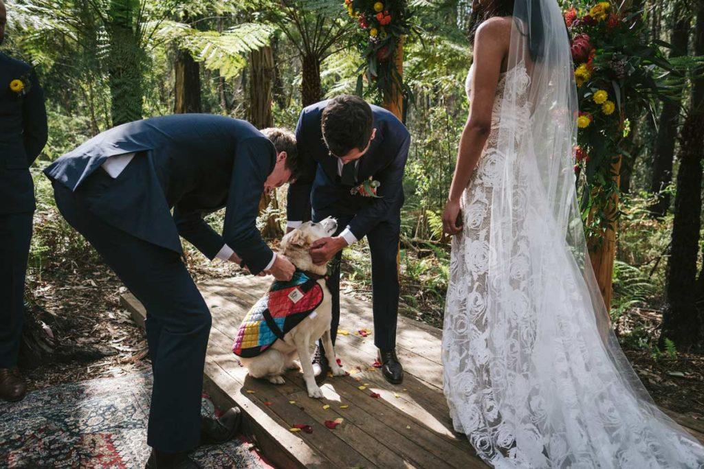 kinglake weddings forest adventures