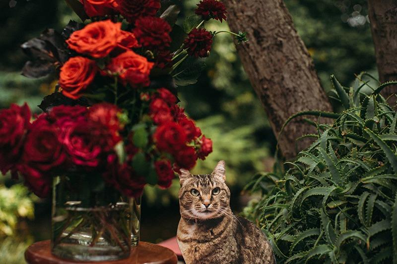 Cat at wedding at Fitzroy Gardens