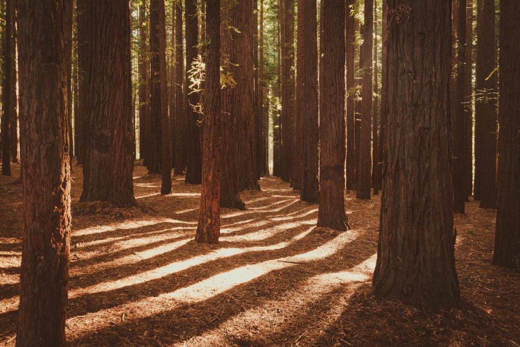Redwood Forest Warburton eloping in Victoria
